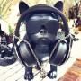 Колонка эстетическая French Bulldog Wireless Bluetooth Speaker (Bluetooth, FM, MP3, AUX)